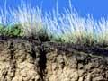 Awatere valley soils