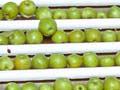 Washing and sorting apples