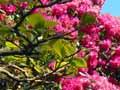 Rhododendron dell, Dunedin Botanic Garden