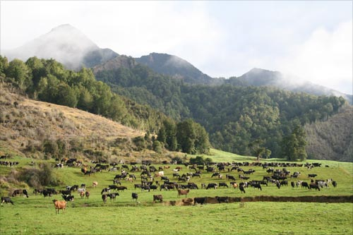 Mātakitaki River valley dairy farm