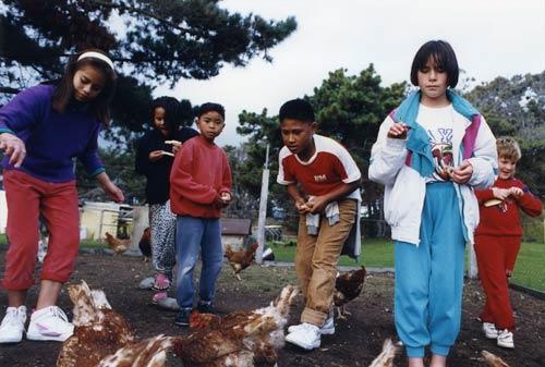 Feeding hens, Ōtaki Health Camp, 1992