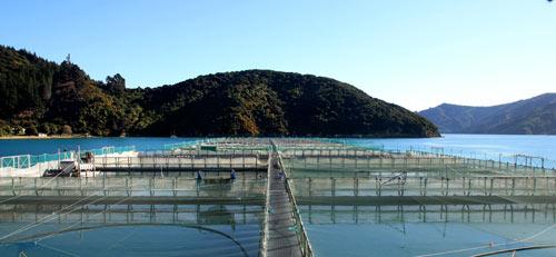 Te Pangu salmon farm