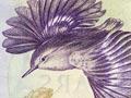 Third series of banknotes: $2