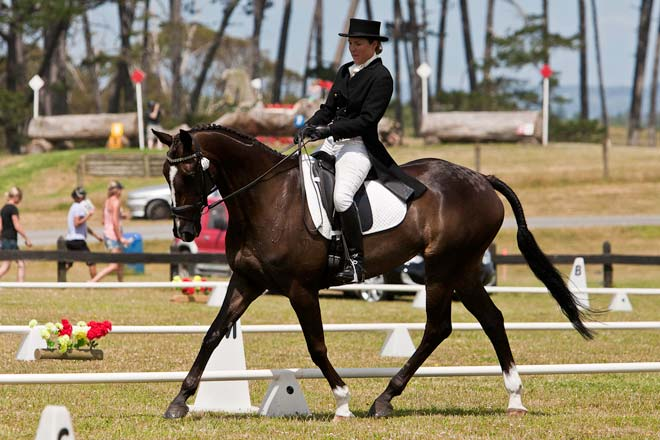 Eventing Dressage Equestrianism And Horse Sports Te