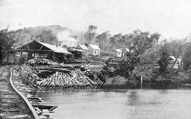 The sawmill at Kaipipi Bay, 1909
