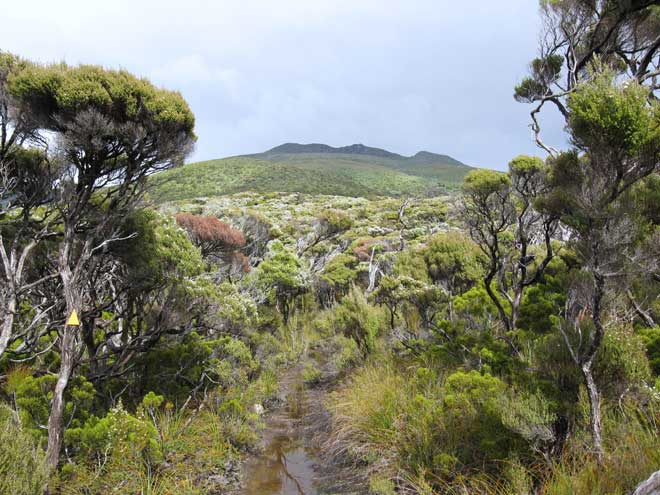 North-West Circuit: Mt Anglem/Hananui
