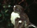 Inspecting black robin eggs