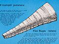 Māori musical instruments poster
