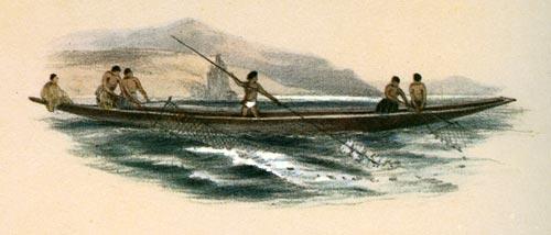Netting kōaro