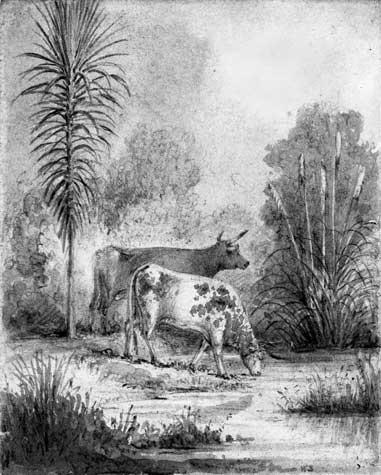 Cattle in the bush, Hutt River