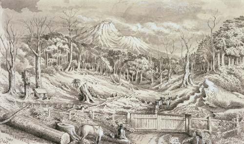 Bush clearing near Ōeo, 1893