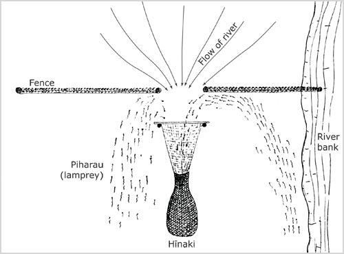 Utu piharau (lamprey weir)