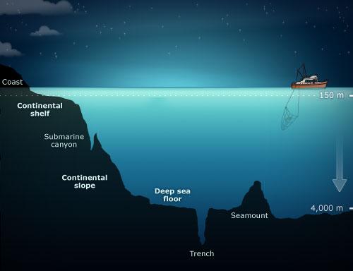 The Sea Floor  U2013 Sea Floor  U2013 Te Ara Encyclopedia Of New Zealand