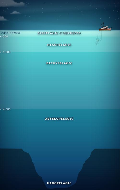 Zones of the ocean deep sea creatures te ara for Ocean floor zones diagram