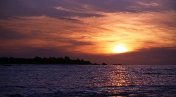 Te Ao Mārama – the natural world