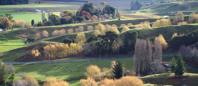 Trees and farmland near Gisborne