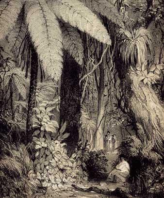 Forest scene near Waipā