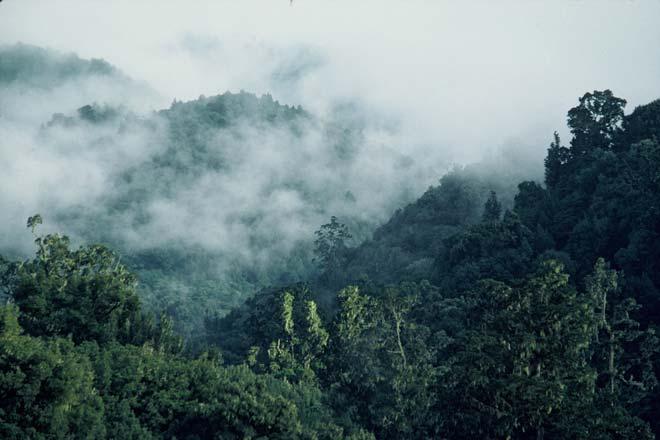 Urewera in mist