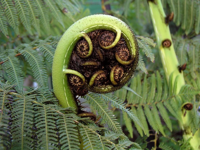 The Koru Mori Creation Traditions Te Ara Encyclopedia Of New
