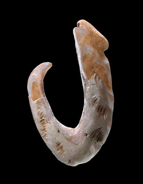 Shellfish hook
