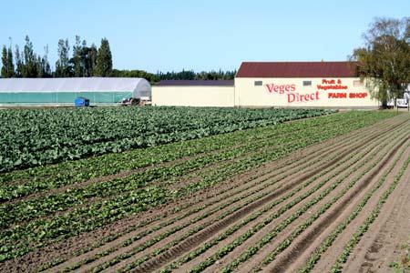 Market Gardening Canterbury Region Te Ara Encyclopedia