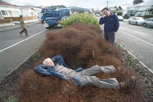 Traffic island planting