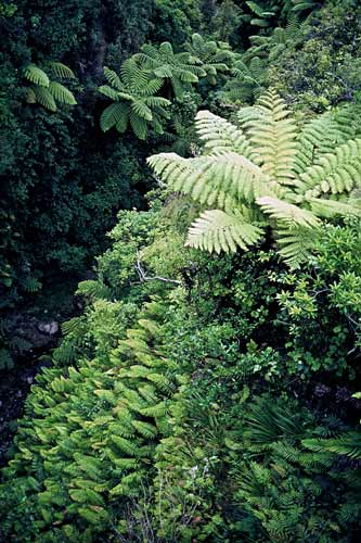 Fern-covered stream banks