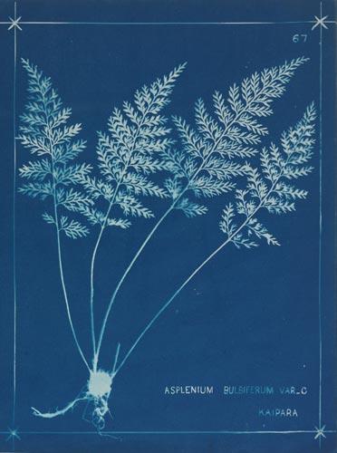 'Blue book' illustration