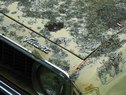 Lichens on an abandoned car