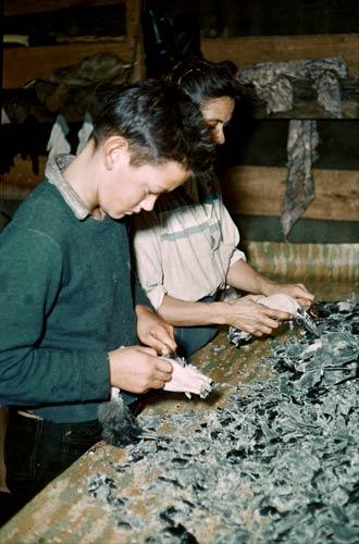 Waxing birds