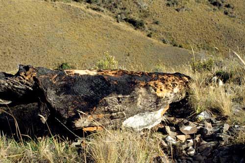 Ancient log