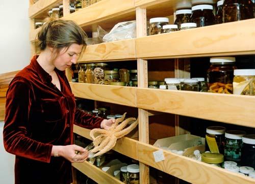 Marine invertebrate collection