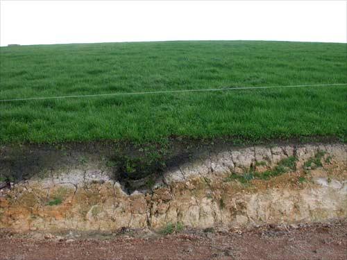 Egg cup podzol in farm land soils te ara encyclopedia for Soil encyclopedia