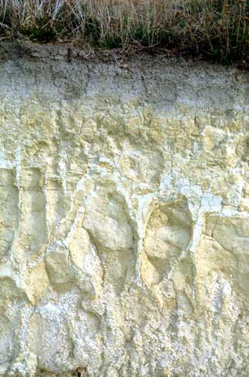 Pallic soil