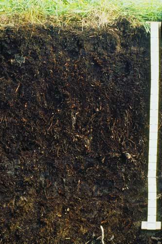 Organic soil soils te ara encyclopedia of new zealand for Soil encyclopedia