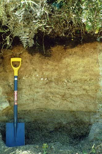 Pumice soil