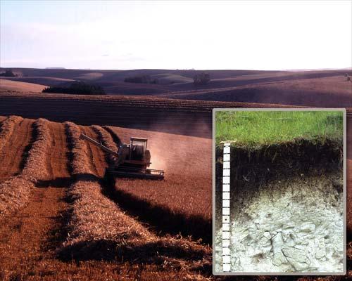 Melanic soil