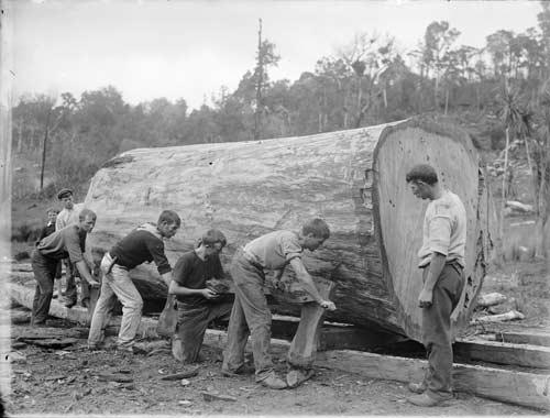Using timber jacks