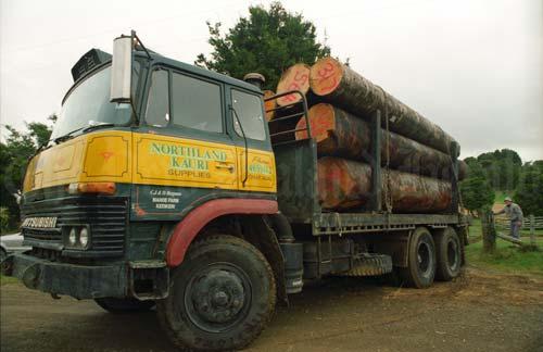 Removing kauri logs