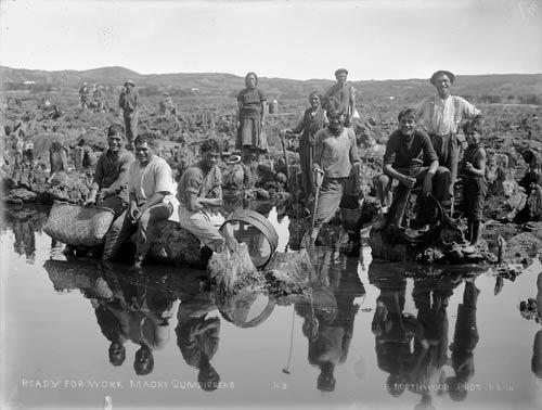 Swamp diggers