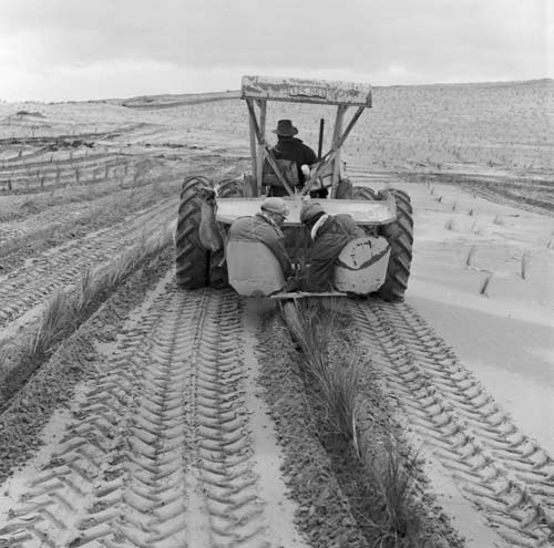 Tractor planting
