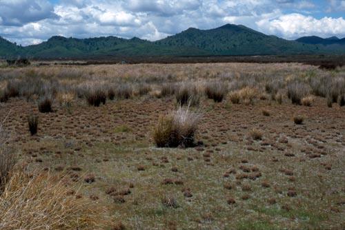 Ephemeral wetland, Volcanic Plateau