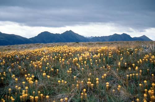 Tablelands, Kahurangi National Park