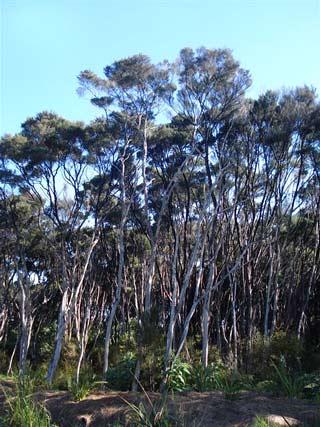 Gumland vegetation, Kaikino valley, Northland