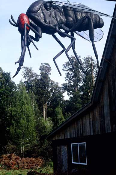 Giant sandfly