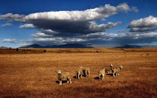 Central Otago drought, 2003