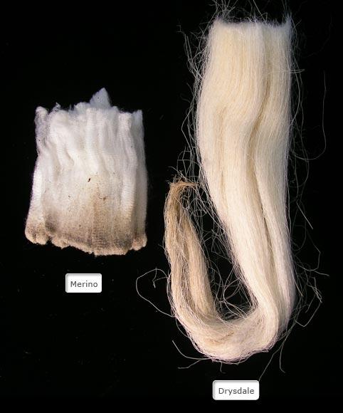 Drysdale and Merino wools
