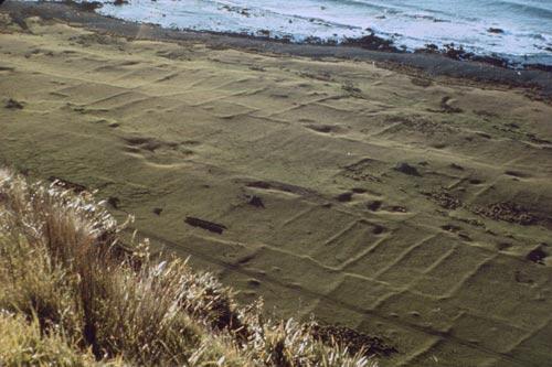 Ngā rohe ahuone o Ōkoropunga