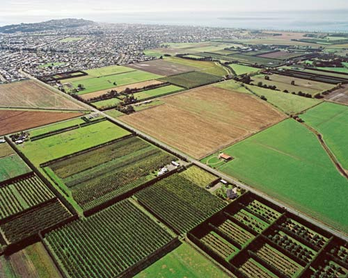 Natural Resources » Horticulture New Zealand