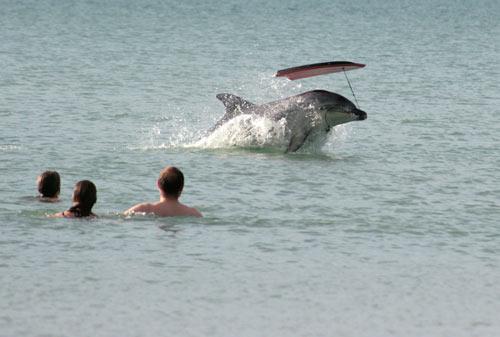 Moko the dolphin, 2008